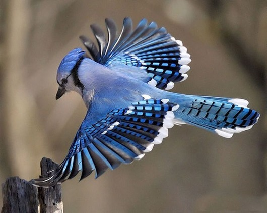 Most-beautiful-bird