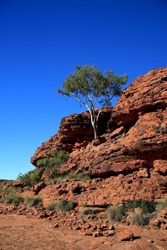 Tree on rock blue sky Kings Canyon outback Australia