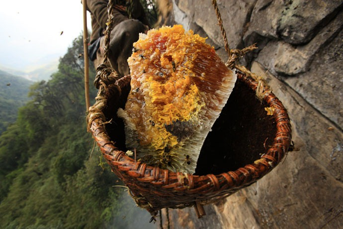 honey-hunters-nepal-29
