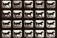 Eadweard Muybridge - Motion Study