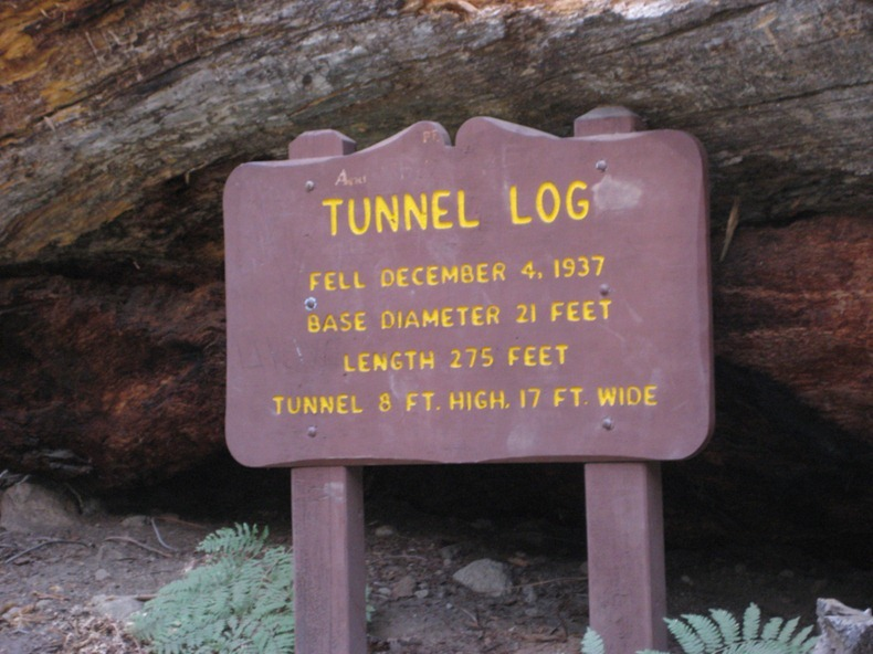 tunnel-log-4