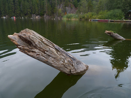 Obiective turistice Harghita: trunchiuri de copaci Lacu Rosu