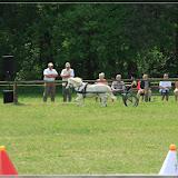 Hindernisfahren Kleinpferde
