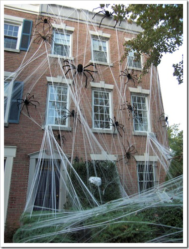 spiders apartment therapy