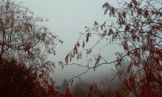 Extreme Fog