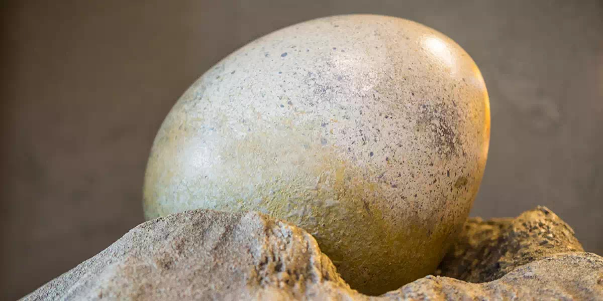 Vị linh mục Công giáo đã trở thành người đầu tiên tìm ra những quả trứng khủng long như thế nào?