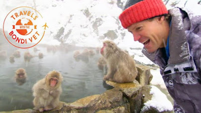 These are the only monkeys in the world that will swim in hot springs Take a sneak peek