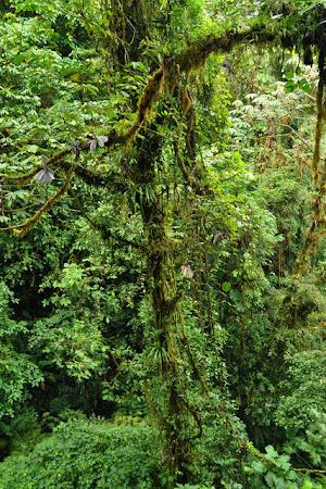 Obiective turistice Costa Rica: Padurea Tropicala Monteverde