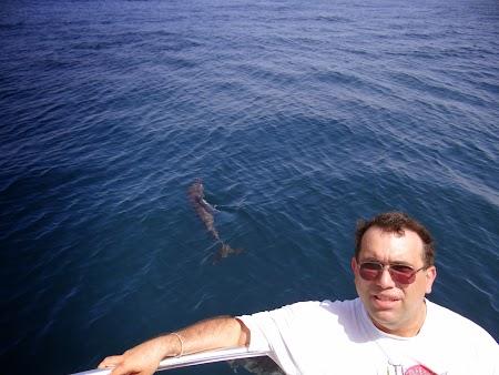 28. La doi pasi de un delfin.JPG