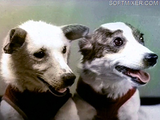 Belka_and_Strelka.Space_Dogs.Real-i