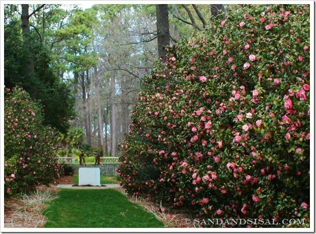 Mrs. Lyman Clarke Camellia (1024x733)