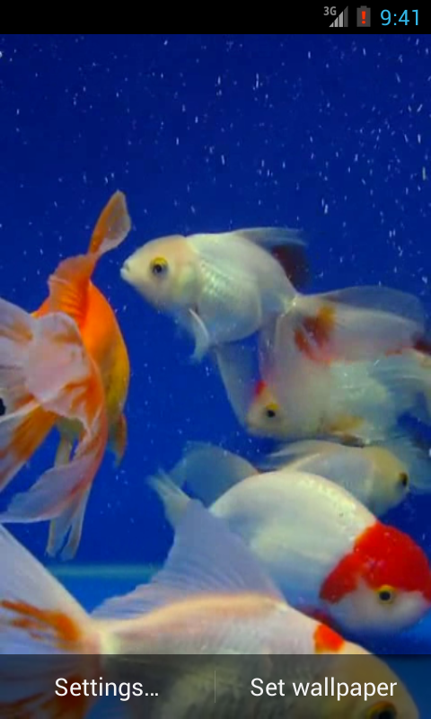 Gold fish video live wallpaper android apps on google play for Can tropical fish live with goldfish