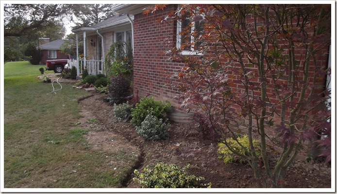 landscaping new plants from lowe's 011