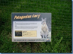 0304 Alberta Calgary - Calgary Zoo Destination Africa - South America - Patagonian Cavy
