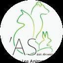 Image Google de animaux sauves