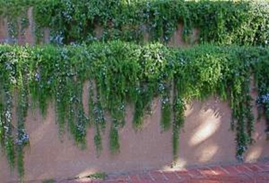 wall of rosemary_WEB