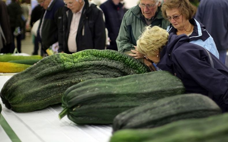 giant-vegetables-9