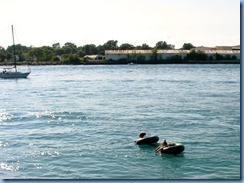 3657 Ontario Sarnia - St Clair River - ppl floating in the current