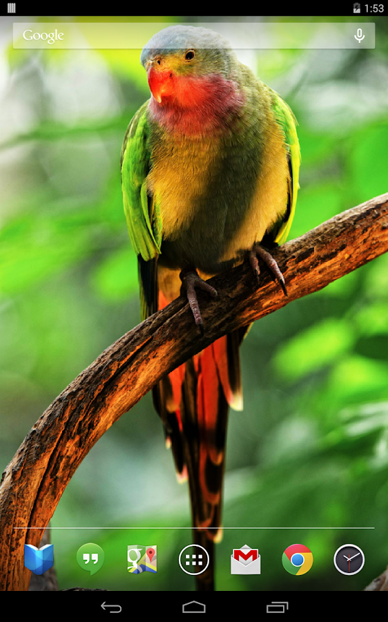 Parrots Live Wallpaper- screenshot