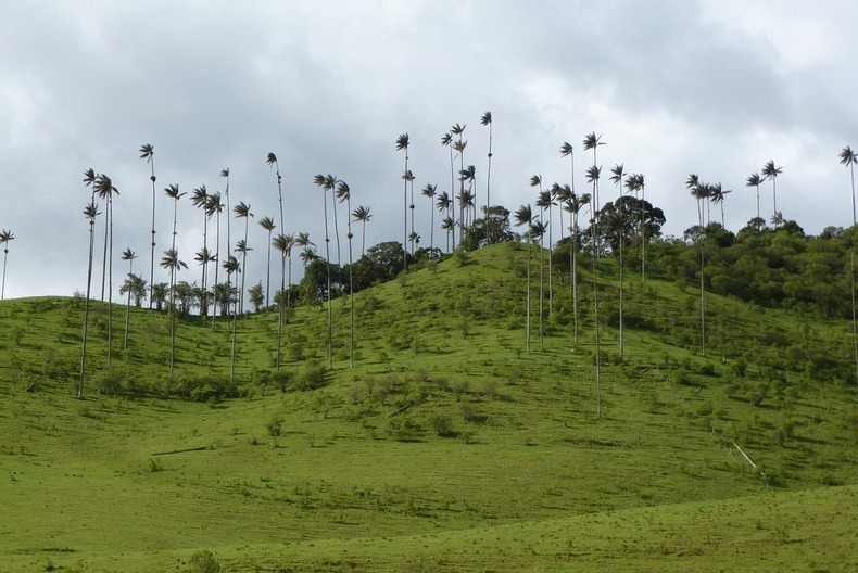 cocora-valley-2