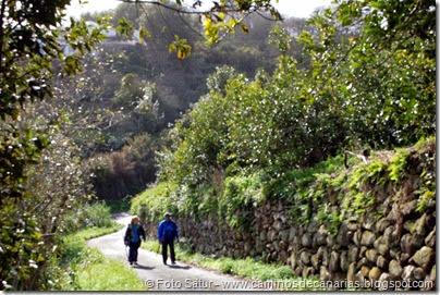 7349 La Laguna-Barranco Laurel(Las Tosquillas)