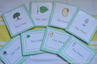 Botany Unit Lessons