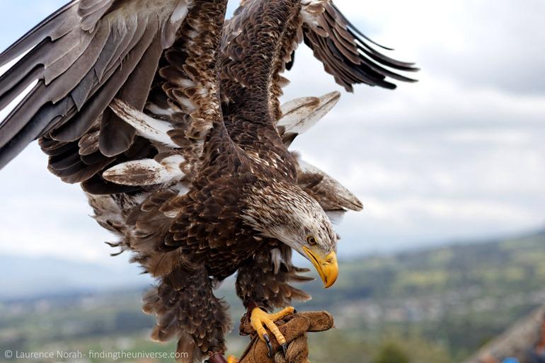 Eagle scaled Otavalo Parque Condor
