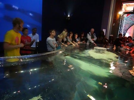 35. Mangaind rechinii.JPG