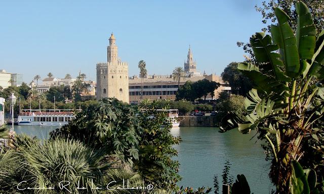 Sevilla - Triana 29 - 11 - 2011 (2).jpg