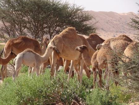 26. Camile in Oman.JPG