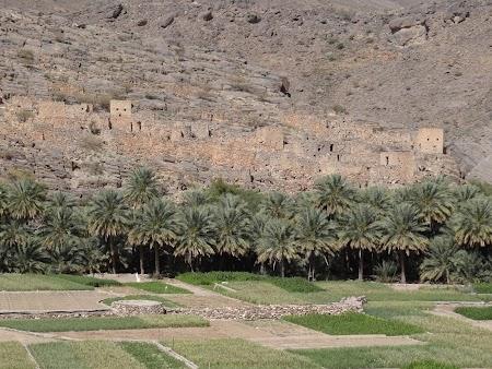 31. Oaza in Oman.JPG