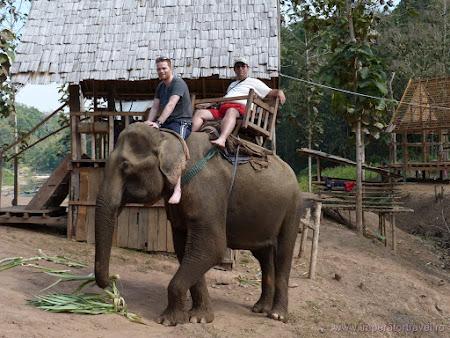 122. pe elefant.JPG