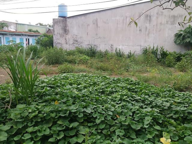 Bán đất thổ cư Ấp 7 xã Tân Thạnh Đông Huyện Củ Chi 03