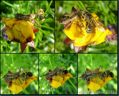assassain bug collage