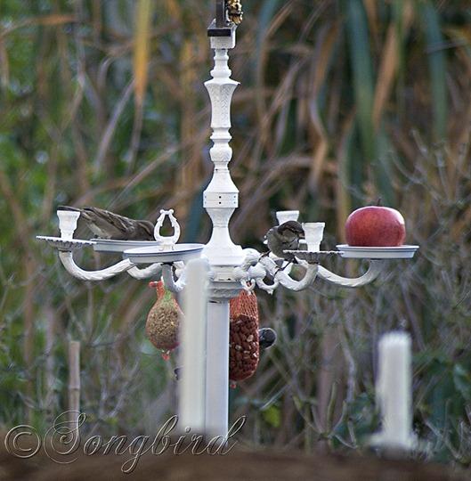 Birds on Birdfeed Chandelier 4