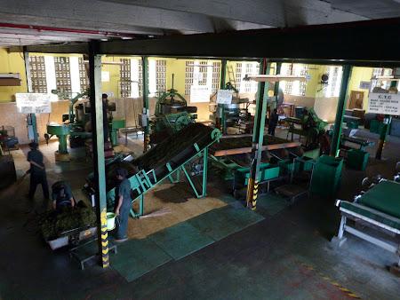 Imagini Sri Lanka: productia de ceai