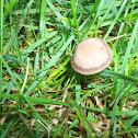 Mowers Mushroom