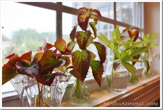 plant cuttings (1024x683)