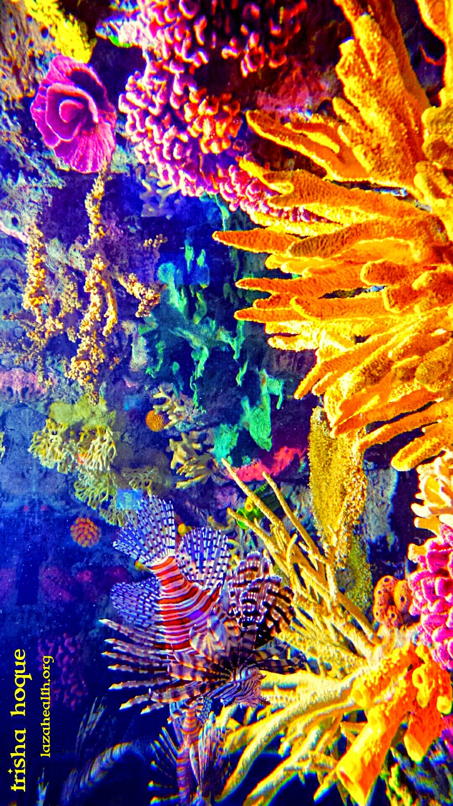 Nature paints the most beautiful masterpieces: Coral reefs  Nature paints t...