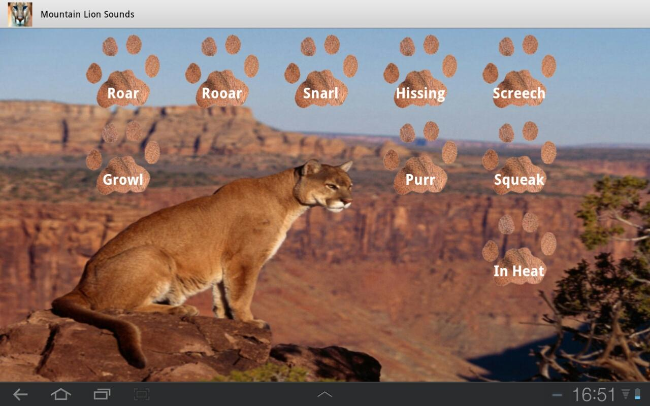 Mountain Lion Roar - photo#41