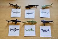 Shark Unit II (FREE Shark Matching and Fact Cards)