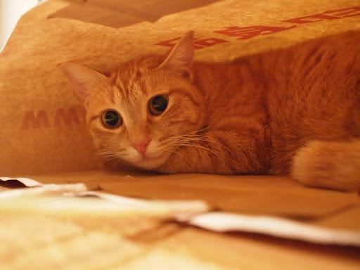 [写真]紙袋の中にひそむドーラ