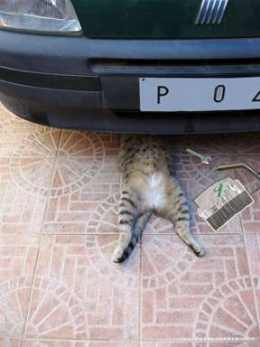 Gato Mecânico2