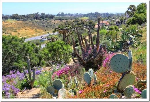 Succulents and More: The Desert Garden in Balboa Park