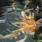 Тайланд 14.05.2012 13-28-44.JPG