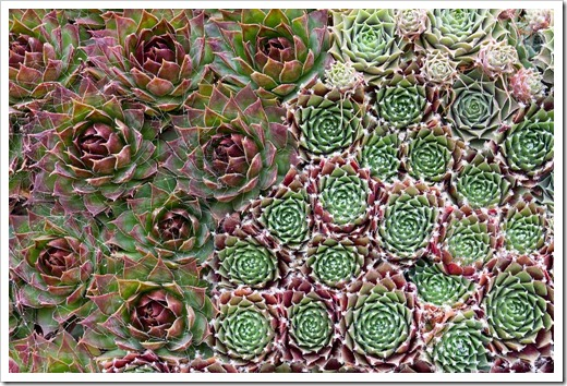 120928_SucculentGardens_wall-panel-closeup2