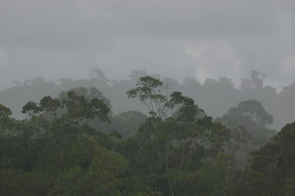 Saut Athanase (sous la pluie) sur l'Approuague. 19 novembre 2011. Photo : J.-M. Gayman