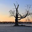 Early Frost-Robert Riddell.jpg