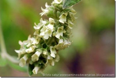 795 Bº del Laurel(Salvia de los Tilos)