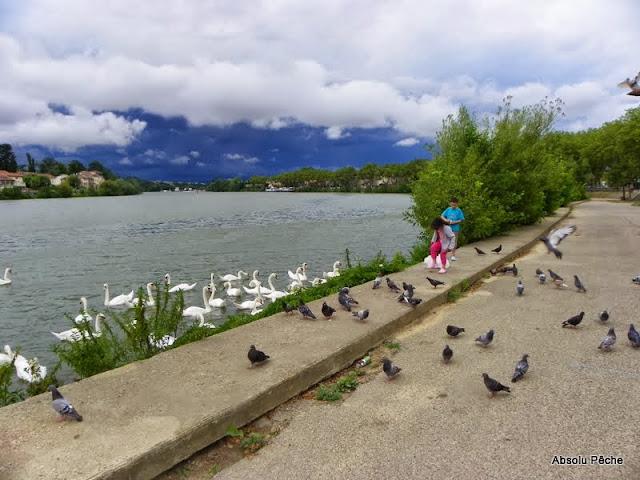 Pont de Neuville sur Saône photo #1436